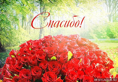 """Открытка """"Спасибо!"""" с розами"""