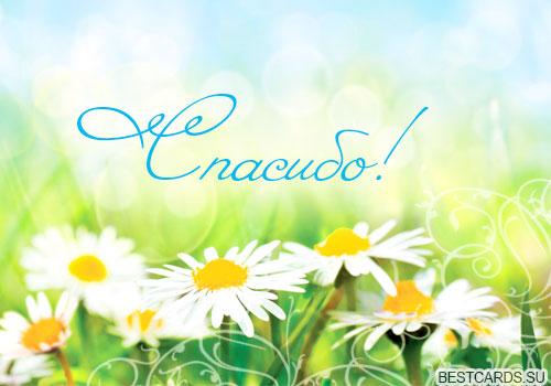 http://bestcards.su/wp-content/uploads/otkrytka-spasibo-s-cvetami.jpg